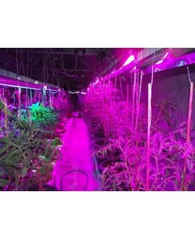 Лампа для растений Osram FLUORA 58W T8