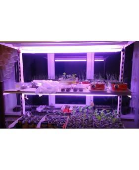 Лампа для растений Osram FLUORA 30W T8