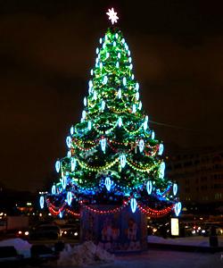 Новогодние елки,сосны