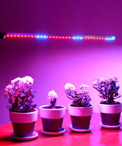 Led лента для роста растений(фитолента)
